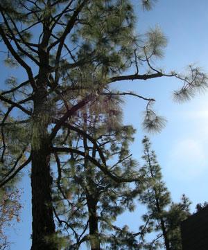 近隣の樹木